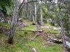 Links des Weges: lichter Wald.