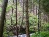 Wildwasserpfad