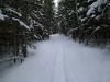 Ein schmaler Schneepfad führt zur Speckbacherhütte.