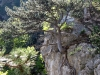 Genügsamer Baum