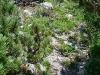 Steile Latschenfelder
