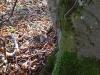 Es geht durch Wald (mit putzigen Mäusen) ...