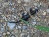 Salamander am Einstieg