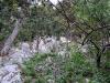 Am Beginn gehts steil durch den Wald.